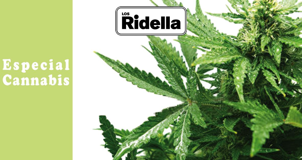 Inicio Cannabis