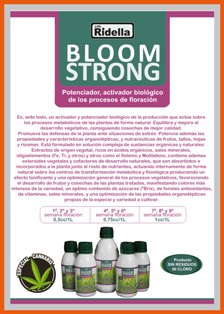Flyer-Bloom+-Strong